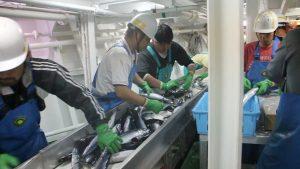 ブライン凍結税品製造の流れ写真03