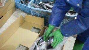 ブライン凍結税品製造の流れ写真04